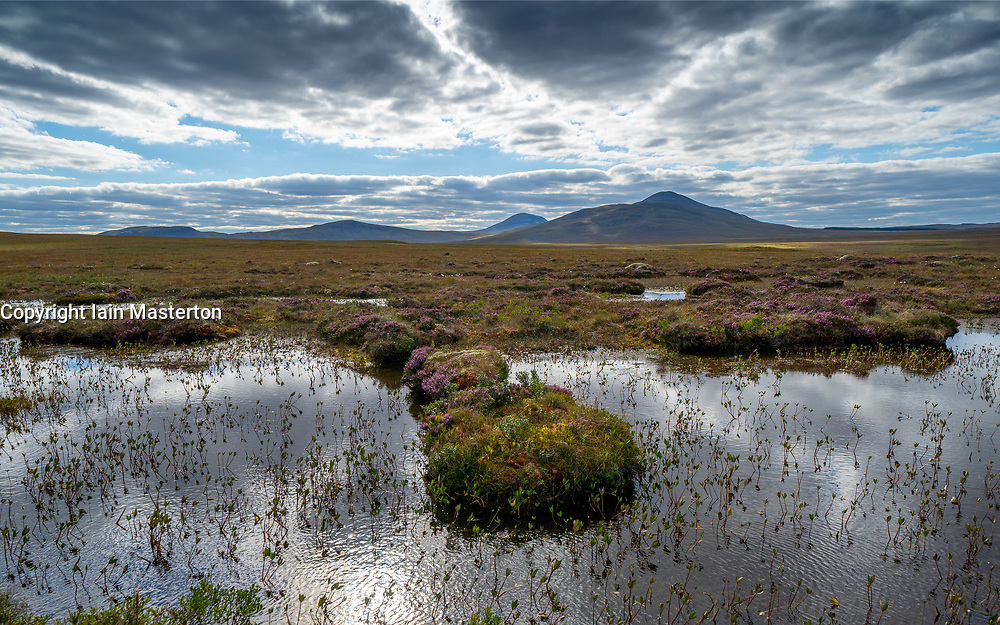 View of landscape of the Flow Country at RSPB Forsinard Flows Nature Reserve in Sutherland, Highland,  Scotland, UK