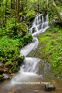 66745-04805 Waterfall along the  Middle Prong Little River in spring Great Smoky Mountains National Park TN
