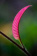 Parauapebas_PA, Brasil...Detalhes da vegetacao amazonica na Floresta Nacional de Carajas, Para..Details of the Amazonian vegetation in the National Forest of Carajas, Para..Foto: JOAO MARCOS ROSA / NITRO