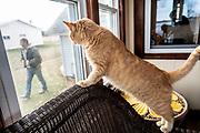 Tony, one of the Wokatsch family cats, watches Randy walk past on his family farm in Marathon, WI, Monday November 11, 2019.