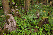 Europa, Deutschland, Nordrhein-Westfalen, Panzersperren des Westwall bei Hellenthal-Hollerath in der Eifel.  <br /> <br /> Europe, Germany, North Rhine-Westphalia, tank traps of the Siegfried line near Hellenthal-Hollerath, Eifel region.