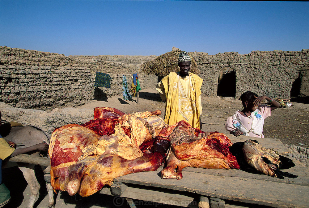 A slaughtered cow rolls on a cart through the dusty mud-brick village of Kouakourou, Mali, destined for sale that day at the nearby Saturday market. Because the town has no electricity, and thus no refrigeration, this family will sell all their meat by sunset of the same day that the cow was slaughtered. Hungry Planet: What the World Eats (p. 210). This image is featured alongside the Natomo family images in Hungry Planet: What the World Eats.