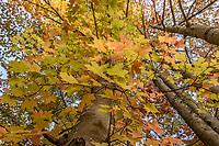 Fall foliage in the Lakes Region.  Karen Bobotas for the Laconia Daily Sun