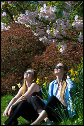April 18, 2018 - London, London, United Kingdom - Polina Davydova (left) and Jenny Chernova (right) sit amongst the flowers in the sunshine at Regent's Park...Sun seekers enjoy the hot sunny weather during the first heatwave of the year in Regents Park, London, UK. (Credit Image: © Ben Stevens/i-Images via ZUMA Press)