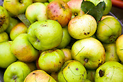 Cooking apples close up