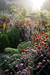 Sun burning through the early morning mist in the exotic garden at Great Dixter. Dahlias, Cannas, Verbena bonariensis, Eucalypus gunnii. Dahlia 'Grenadier' in the foreground