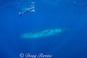 videographer Skip Stubbs and Bryde's whale, Balaenoptera brydei or Balaenoptera edeni, off Cabo San Lucas, Baja California, Mexico ( Eastern Pacific Ocean ) MR 398