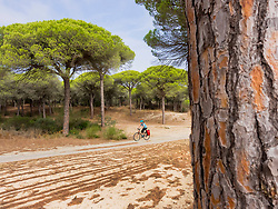 Mountain biker riding on dirt track through forest