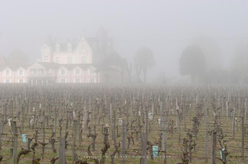 vineyard fog ch gd barrail lamarzelle figeac saint emilion bordeaux france