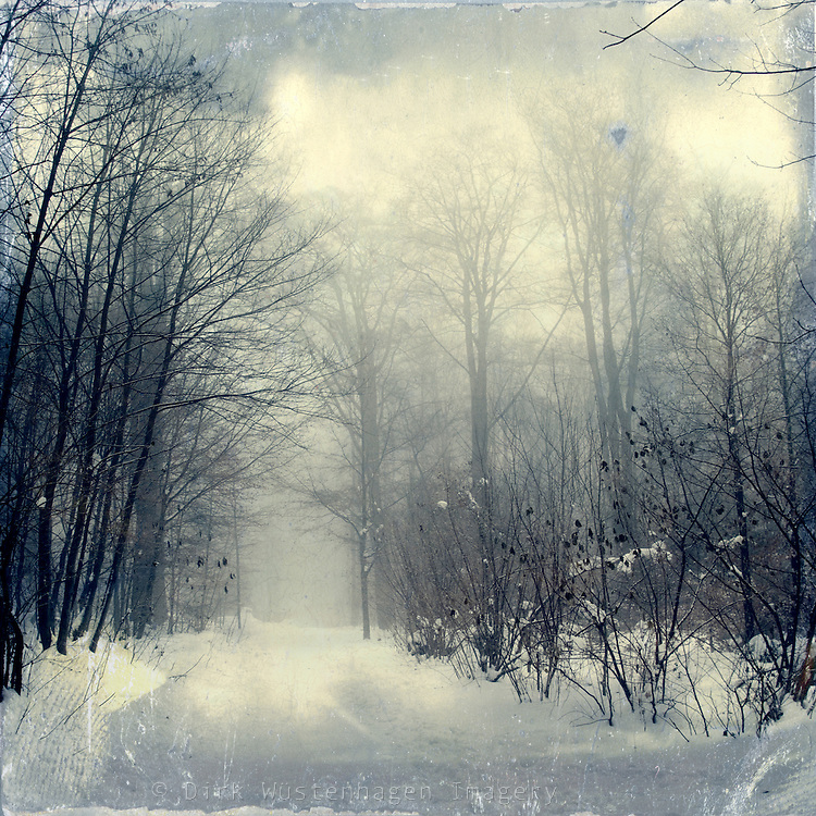 foggy winter scenery in a forest