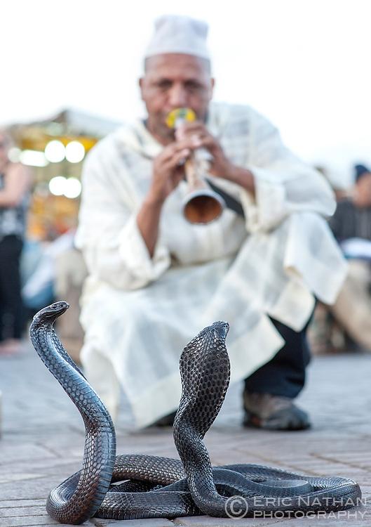 Snake charmer and cobras in Jemaa El Fna Square in Marrakech, Morocco.