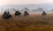 Tourists going on elephant safari in Kaziranga National Park, Assam, India.