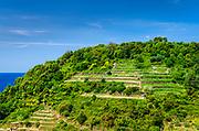 Hillside vineyards in Corniglia, Cinque Terre, Liguria, Italy