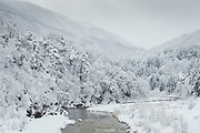 Scenic mountainous landscape with covered in snow forest, Shirakawa-go, Japan