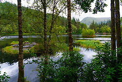 View of Glencoe Lochan in woodland above Glencoe village, Highland, Scotland, UK