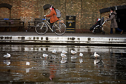© Licensed to London News Pictures. 31/01/2019. London, UK. Birds sit on frozen water on the canal network in Little Venice, West London, as temperatures in the capital drop to the lowest of the winter so far. Photo credit: Ben Cawthra/LNP