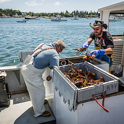 Captain Greg Carter and sternman Cody Roberts sort lobsters at the Vinalhaven Fishermen's Co-op in Vinalhaven, Maine.