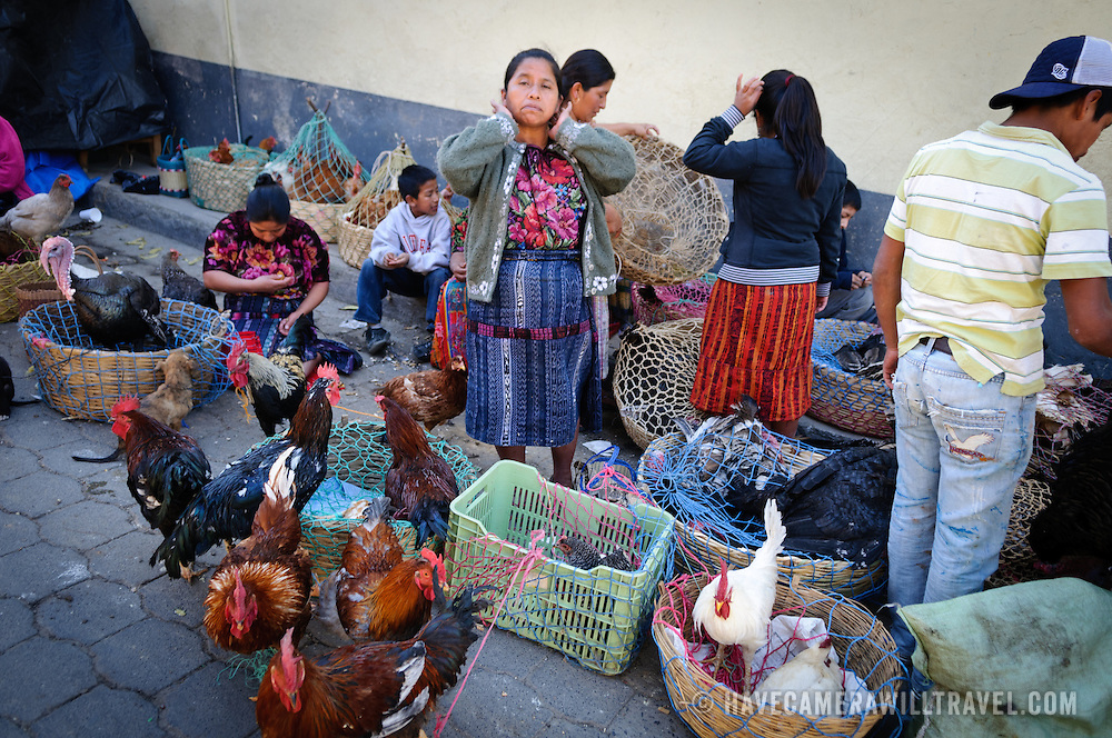 A family sells chickens and roosters at the market in Chichi. Chichicastenango is an indigenous Maya town in the Guatemalan highlands about 90 miles northwest of Guatemala City and at an elevation of nearly 6,500 feet. It is most famous for its markets on Sundays and Thursdays.