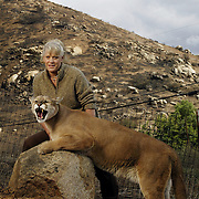 """Joan Embery rescued 30 wild animals and 30 horses from her Lakeside Ranch as a fire roared up to the property line. Embery is seen with """"Mugger"""", a 7-yr-old mountain lion, """"Claudia"""" an Andean Condor, and Belles Peppy Boy, Joan's favorite horse. Photographed at the site where Joan and Duane (seen with her in the photos of horses), along with employees, beat the flames from the Cedar Fire that reached their ranch.  .© Todd Bigelow/Aurora."""