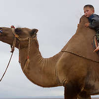 A toddler rides his father's Bactrian camel in the southern Gobi Desert, Mongolia.