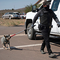 Navajo Nation animal control officer Vincent Tsosie leads a dog to a cage trailer as part of a dog sweep in Sundance Tuesday, June 15.