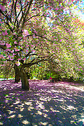 New York City: Spring in Prospect Park