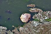 Nederland, Ooijpolder, 23-6-2020 In een opdrogende waterpoel liggen toentallen vissen die zijn gestorven wegens zuurstoftekort. De poel vult zich tijdens hoogwater van de rivier de Waal, Rijn, waardoor de vissen opgesloten komen te zitten als het water weer zakt, bij laagwater . De poel wordt door wilde runderen en paarden gebruikt als drinkplaats, maar door de vele dode vissen stinkt het en is de waterkwaliteit niet meer optimaal. rivierengebied, rivierenland, uiterwaarden, rivierenlandschap, rivierlandschap . Uiteindelijk zal de plas droogvallen . Foto: Flip Franssen