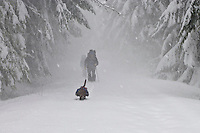 A pack carrying dog leads snowshoers as they emerge from the obscurity of a snowstorm along the Rainier Vista Trail of the Mount Tahoma Trails cross country and snowshoe hut-to-hut trail system in the Cascade Mountain Range near Mount Rainier in Washington state, USA.