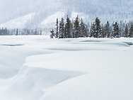 This is looking south into the flood plain of the White River, in Mt. Hood National Forest, Oregon.