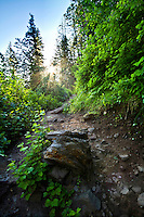 Hiking the trail to Stewart Falls in Utah's Wasatch Mountains.