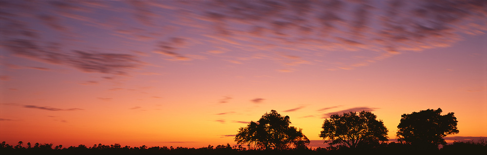 3 trees with red sky at sunrise, Delta Camp
