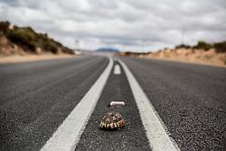 Mar 29, 2012 - South Africa - A turtle crosses the road. (Credit Image: © Elijah Hurwitz/ZUMAPRESS.com)