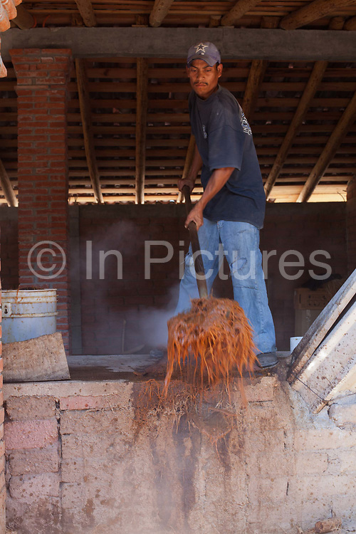 Mexican man processing the distilled agave cactus. Oaxaca in southern Mexico is known for being the main producer of Mescal, the drink of which Tequila is a type. The Mescal route around the area of Mitla has dozens of artisan distilleries which can be visited to take part in Mescal tasting sessions and to see how they cut the agave cactus and make the drink in the traditional way.