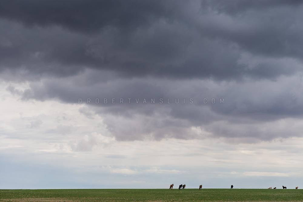 Horses gather on the horizon under stormclouds, in the Gobi Desert, Mongolia. Photo © Robert van Sluis - www.robertvansluis.com