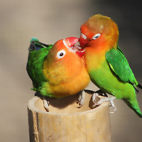 A pair of birds at Parc Paradiso sharing some love...and a snack.