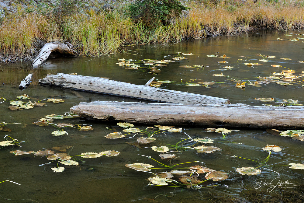 Isa Lake on the Continental Divide with lily pads trapped in fresh ice, Yellowstone NP, Wyoming, USA