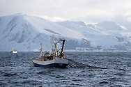 Fishing for spring spawning herrin, Moere coastline, Norway<br /> Model release by photographer