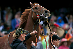 May 4, 2019 - Louisville, KY, U.S. - LOUISVILLE, KY - MAY 04: Country House (20) wins the 145th running of the Kentucky Derby after Maximum Security (7) was disqualified on May 4, 2019 at Churchill Downs, in Louisville, KY.(Photo by Jeffrey Brown/Icon Sportswire) (Credit Image: © Jeffrey Brown/Icon SMI via ZUMA Press)