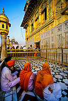 The Golden Temple (holiest Sikh shrine); Amritsar; Punjab; India