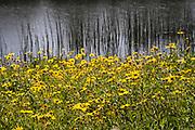 Wildflowers in Ballona Wetlands, Playa Del Rey, Los Angeles, California, USA