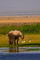 African elephant and baby elephant, Amboseli National Park, Kenya