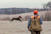 John Zeman and his German Shorthair, Frank, hunt pheasants on a Minnesota public hunting area.