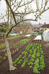 Charles Dowding's organic vegetable garden