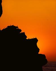 Sunset, sea birds, Morro Rock, Morro Bay, California