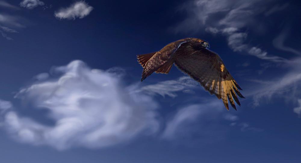 A Hawk Flies Through Dreamy White Clouds in Blue Skies