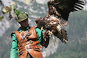Austria, County of Salzburg, Hohenwerfen Castle Birds of Prey Show falconer with a Griffon Vulture