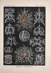 Kunstformen der Natur<br /> Leipzig und Wien :Verlag des Bibliographischen Instituts,1899-1904.<br /> https://biodiversitylibrary.org/page/47388339