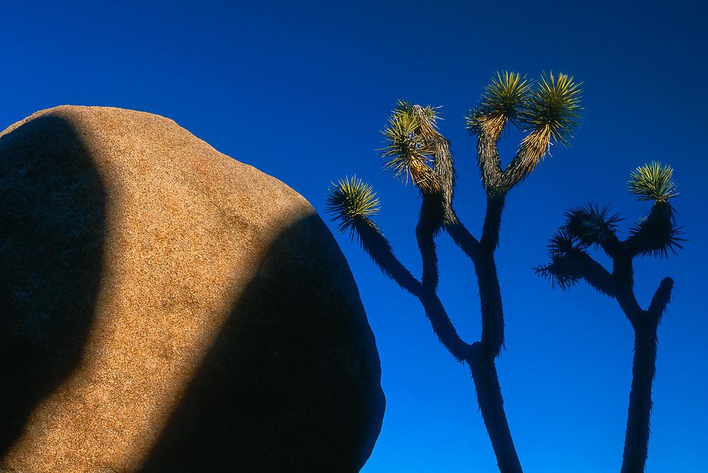 Lost Horse Valley shadows, morning light, Joshua Tree National Park, California, USA