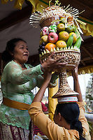 42 days after Galungan, Buda Keliwon Pegatuwakana is a Balinese festival to worship the trinity for the success of the celebration of Galungan and Kuningan.  Typically taking 3 days, women carry huge offerings of fruit to specific temples.  A selection of fruits  called gebogan for offering to the gods.
