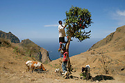 """Boys taking care of a bougainvillaea tree. With a mild climate, the smaller of Cape Verde islands has the nickname of """"flower island""""."""